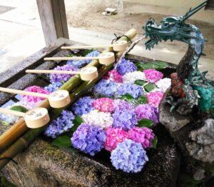 藤森神社紫陽花の花手水を撮影した写真