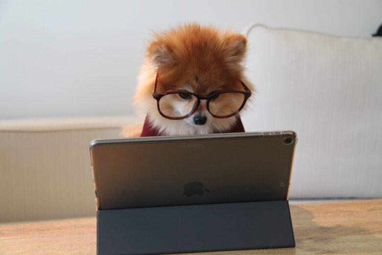 犬がPCを見てる画像