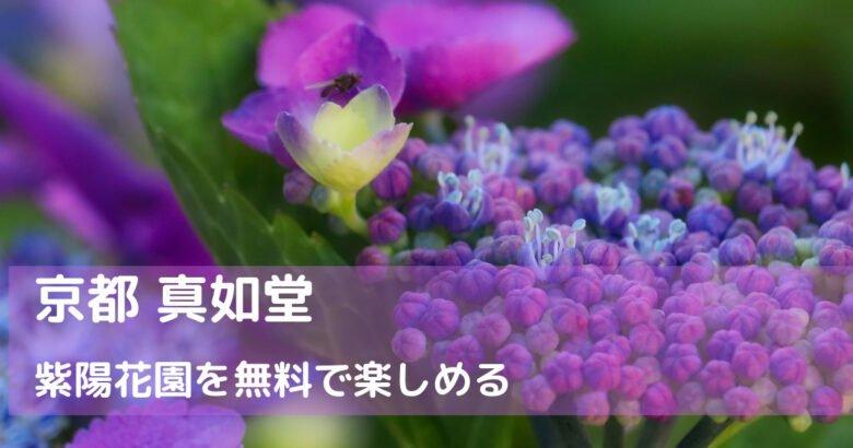京都 真如堂のあじさい園