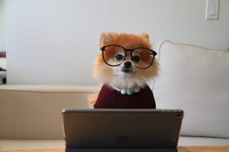 犬がタブレット見てる画像