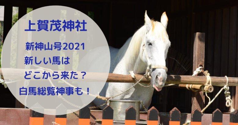 上賀茂神社の神馬を撮影した写真