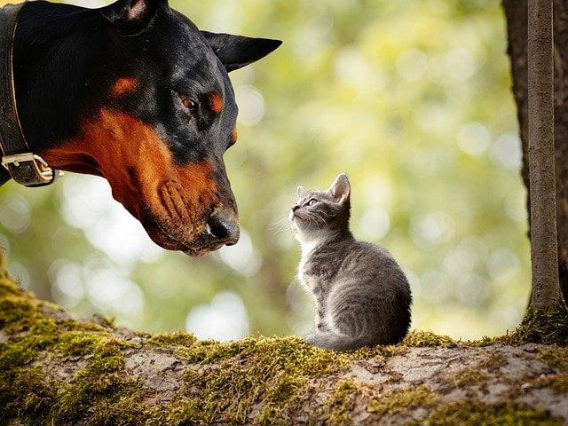木の上で犬と猫が見つめ合う