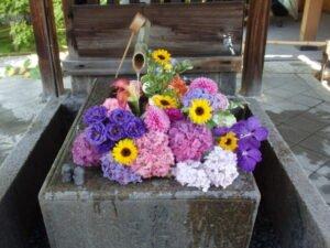 勝林寺花手水を撮影した写真