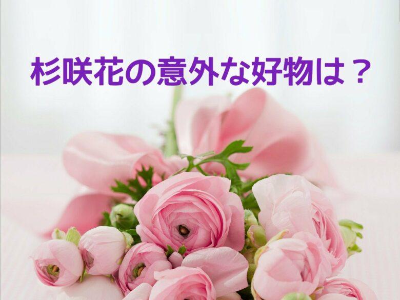 杉咲花好物アイキャッチ画像