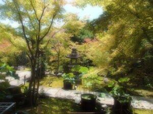 京都勝林寺の吉祥紅葉を撮影した写真