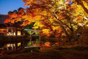高台寺ライトアップを撮影した写真