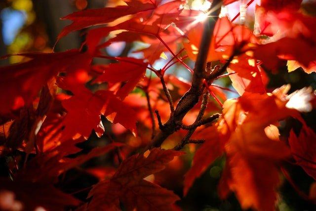 京都の紅葉と太陽の光